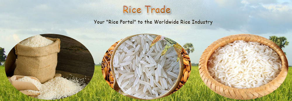 Basmati Rice Export in India, Non Basmati Rice Price