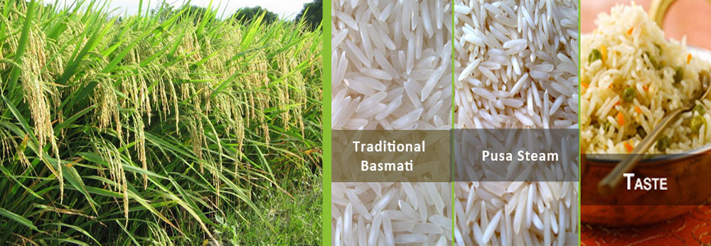 basmati rice cost in india, non basmati rice exporters in india, basmati rice export from india, rice bags and pouch manufactures in india